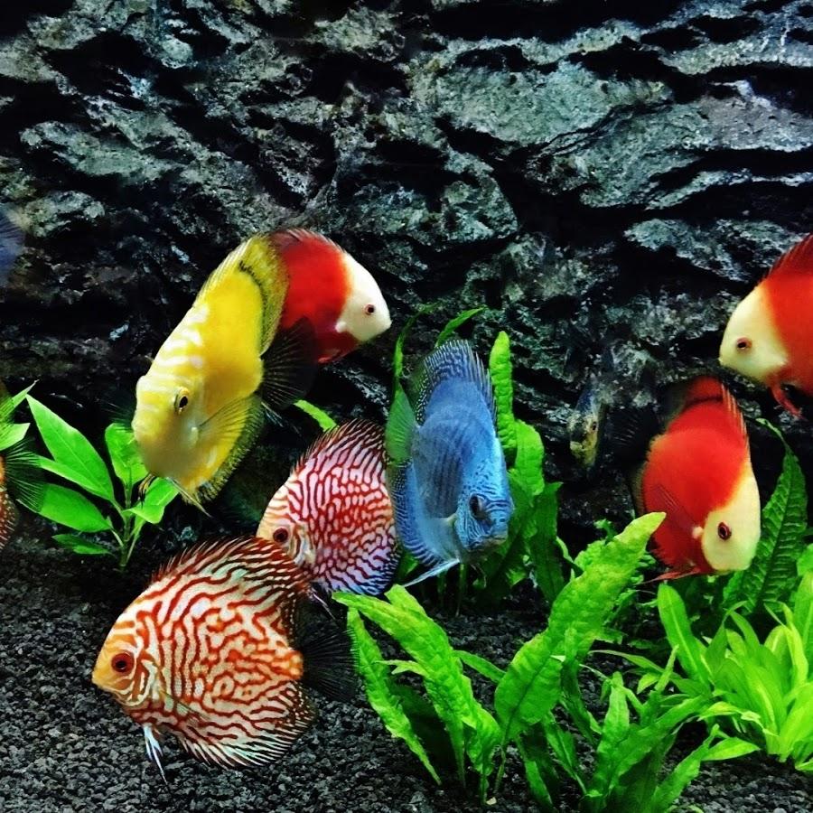 фото всех мирных аквариумных рыб всегда есть возможность