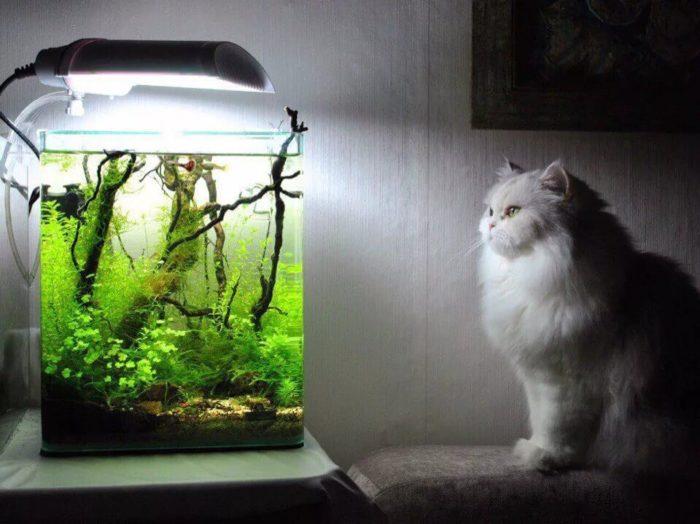 Фильтры для аквариума бывают разными