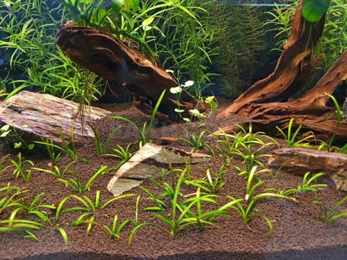 Правильный грунт – основа аквариума