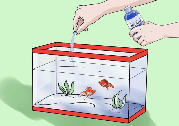Лечение водянки у рыбок