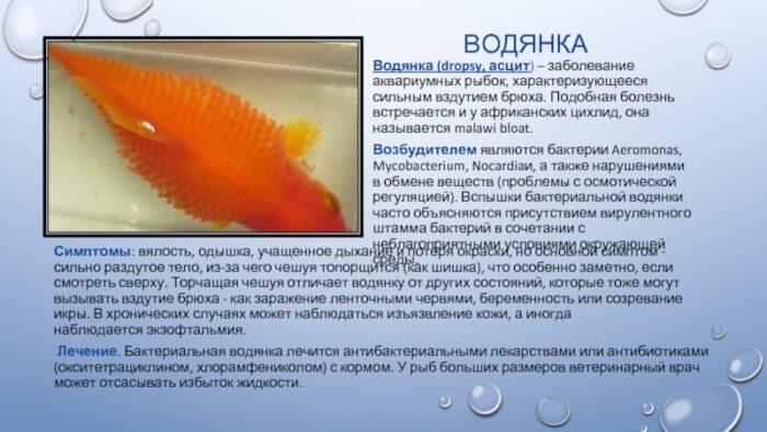 Водянка у рыб