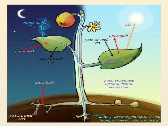 Как раз для растений в аквариум и нужно подавать углекислоту