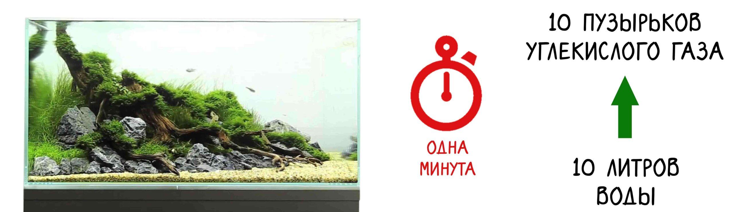 CO₂ для аквариума: способы обеспечения, какую систему лучше выбрать
