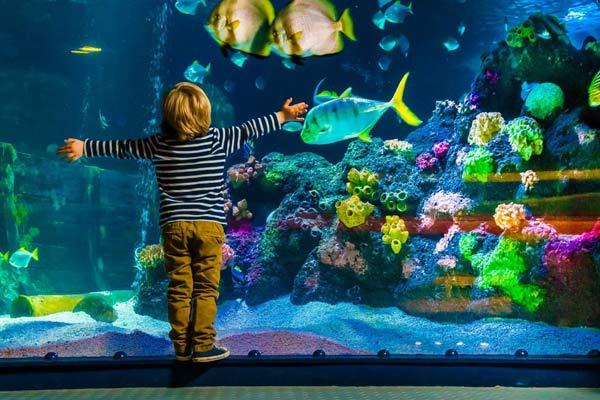 Как сделать аквариум своими руками – подробная пошаговая инструкция!